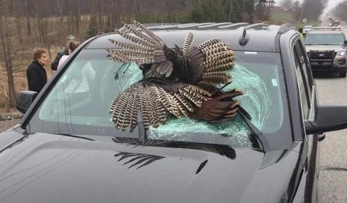 сбить птицу