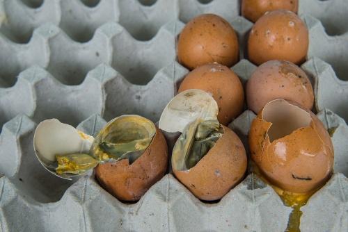 Чем опасны несвежие яйца