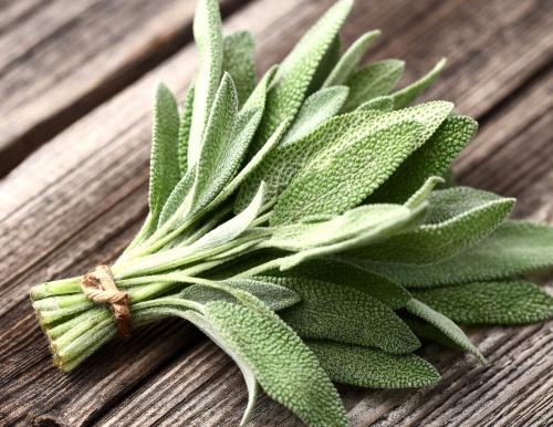 Растение для укрепления здоровья