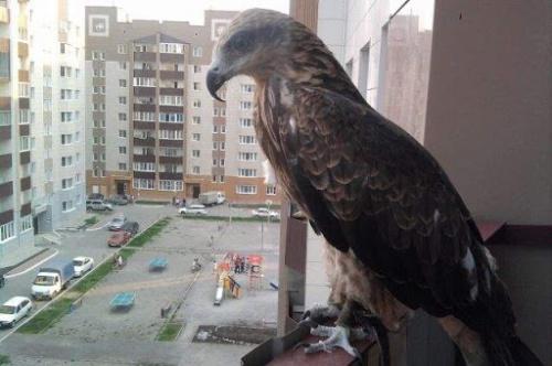 в городе у птиц много опасностей