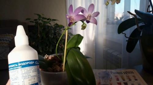 Перекись водорода для цветов