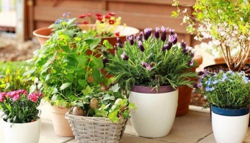 чем подкормить растения