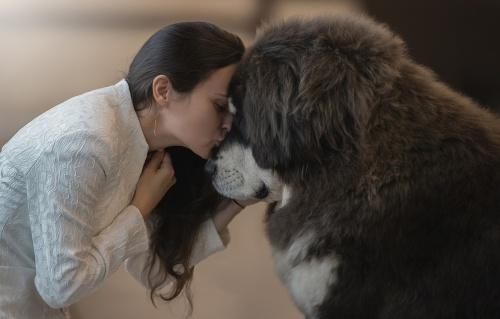 как влюбить в себя Собаку